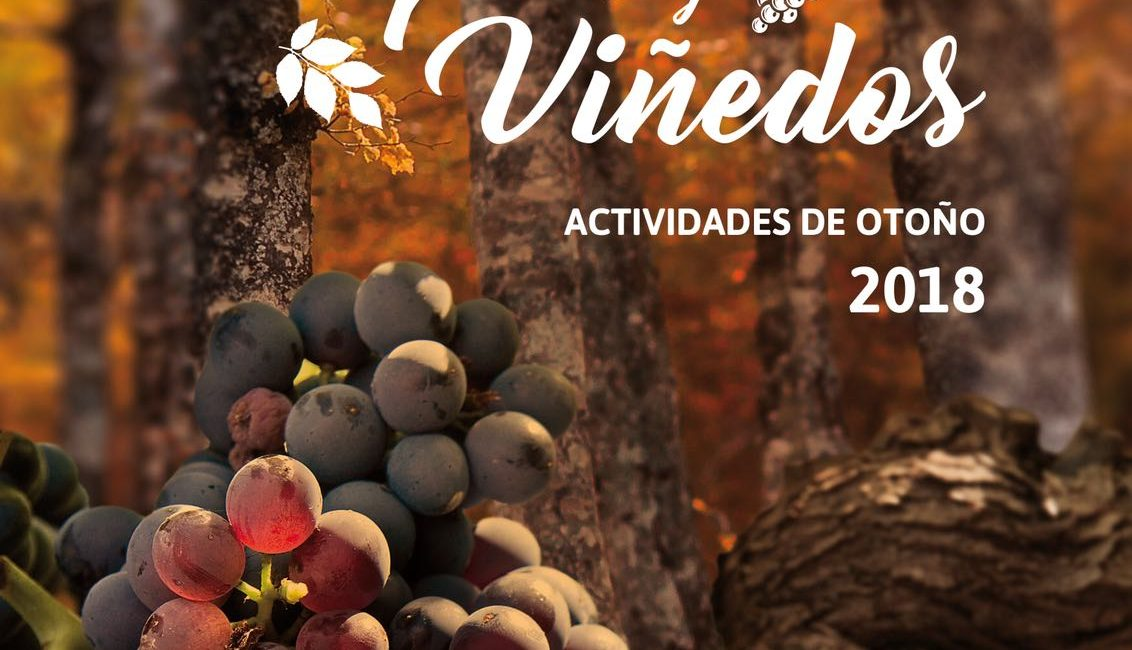 Campaña bosques y viñedos, Otoño en Navarra. Otoño a caballo con Ordoki Zalditegia