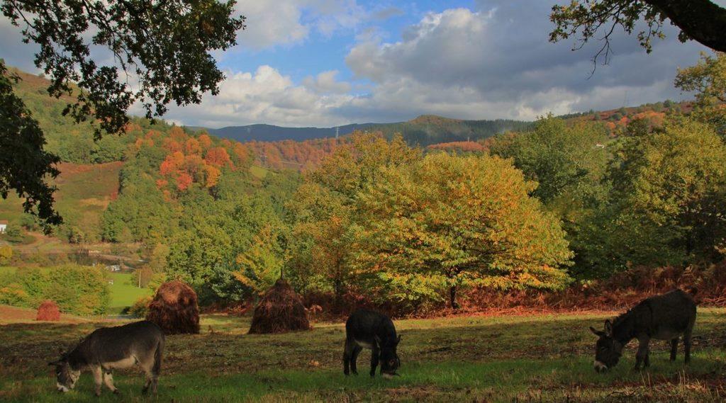 Colores de otoño en Baztan-Bidasoa